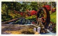 Vintage Postcard of Ravine Gardens (Courtesy State Archives of Florida, Florida Memory)