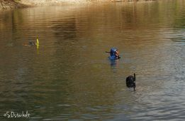 Snorkelers explore the springs