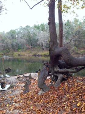 Tree shaped by water and time