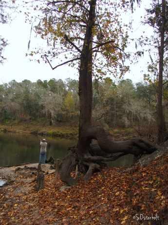 This knarly tree was pretty cool