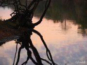 Sunset reflections on the Suwannee