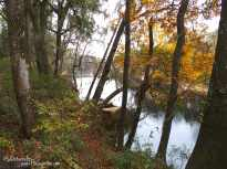 Suwannee River view with fall colors.