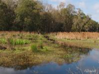 The flooded marsh flows towards the creek