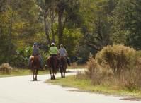Three women ride horses on the trail
