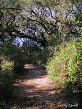 Trail to the oak