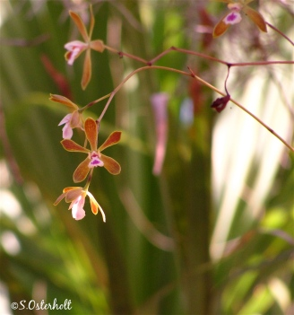 Wild orchids bloom in the summer