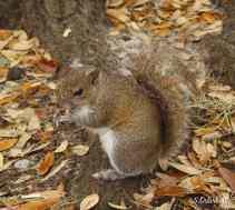 cute little squirrel in picnic area