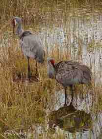 Cranes along the shore