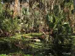 Palm along river