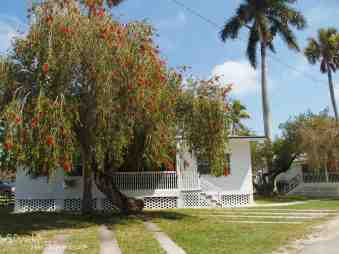Cabins with old palms and huge bottlebrush tree