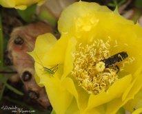 Cactus with katydid and bee