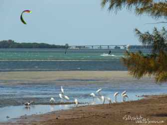 Kite boarding and low tide birds