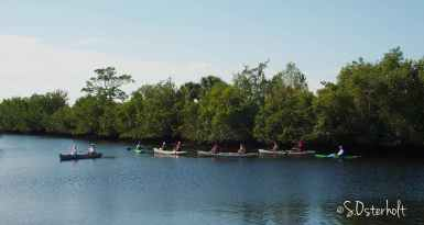 A group goes canoeing down blackwater creek