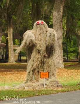 """The elusive """"Moss Man"""" at Gold Head Branch State Park"""