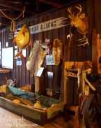 Fishing Display