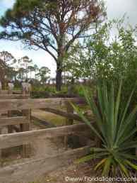 Estero Bay gates