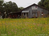 Awesome old barn with a flower filled pasture.