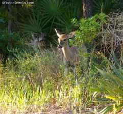 Deer outside the cabin