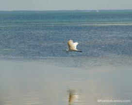 Egret on the bay