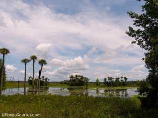 View at Orlando Wetlands Park