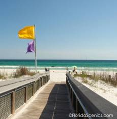 The Beach - Yellow Caution and Purple jellyfish flags