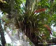 Wild Pine Tillandsia - this was what the hummingbird visited