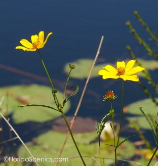 Yellow flowers on the shore