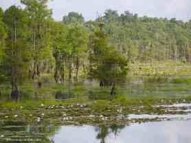 Lake Miccosukee view
