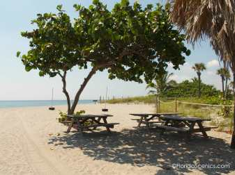 Real Florida Picnic area