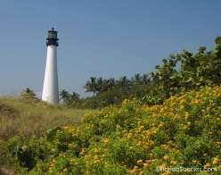 Lighthouse view with yellow lantana and seagrapes