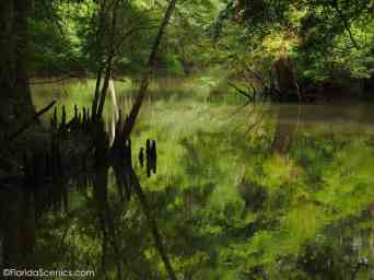 The Chipola River Reflections