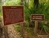 No swimming Alligators