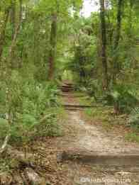 Big Shoals Trail