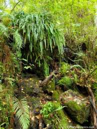 Ferns and moss grow on the sides