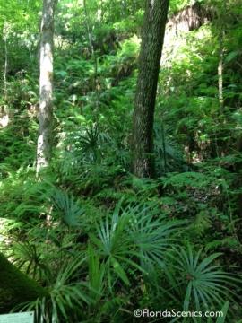 Palms near the stream