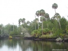 Palms on the river's edge