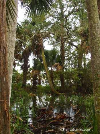 Swampy trail