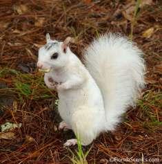 Cute White Squirrel
