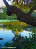 Transparent River mirror