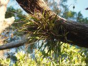 Wild Orchids on tree