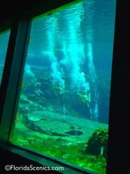 Mermaids through the glass
