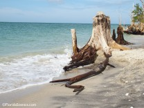 stump in the surf