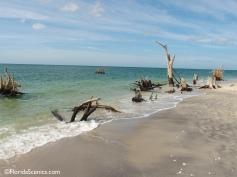 stumps on the beach