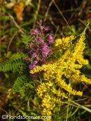 Wildflowers Blazing Star and Goldenrod