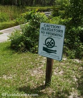 Watch for Alligators!