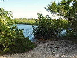 mangroves on the bay