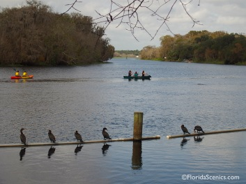 Cormorants and Canoes on the St. Johns River