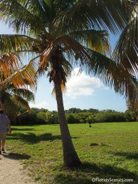 Coconut palms on the island lawn