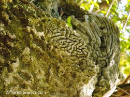 coral fossil in wall