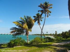 Crossed Palms